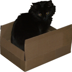 Long haired black cat in a plain brown cardboard box